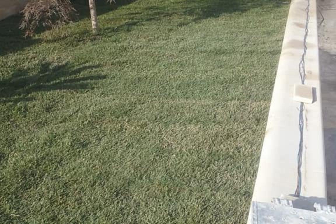 Vivai petrachi lecce - Posa prato e manutenzione verde - foto 3