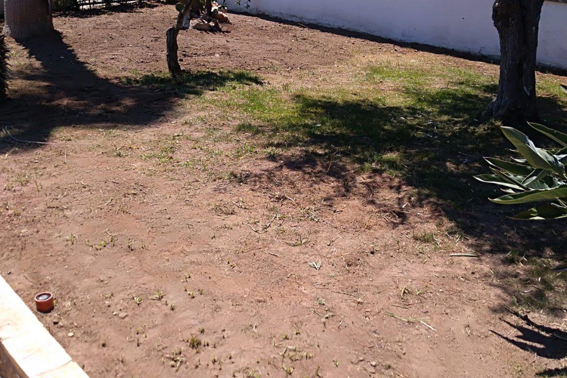 Vivai petrachi lecce - Posa prato e manutenzione verde - foto 2