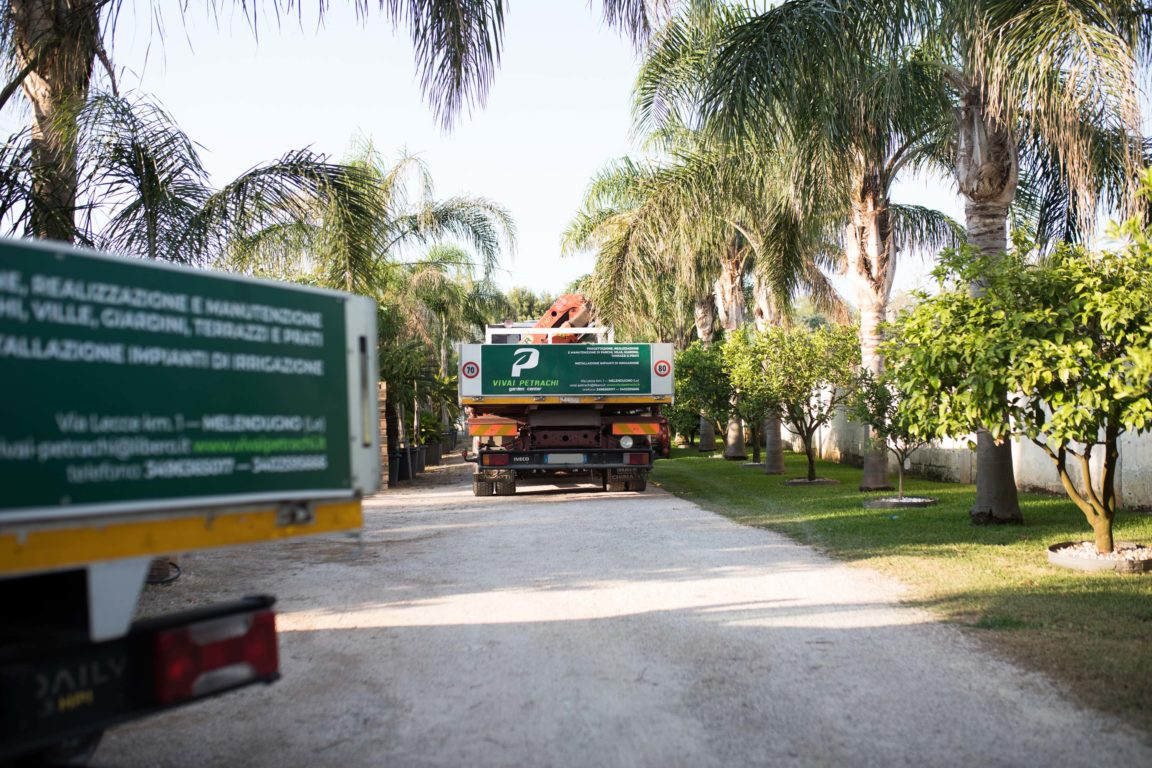 Vivai petrachi lecce - Vivaio e Garden center - foto 1