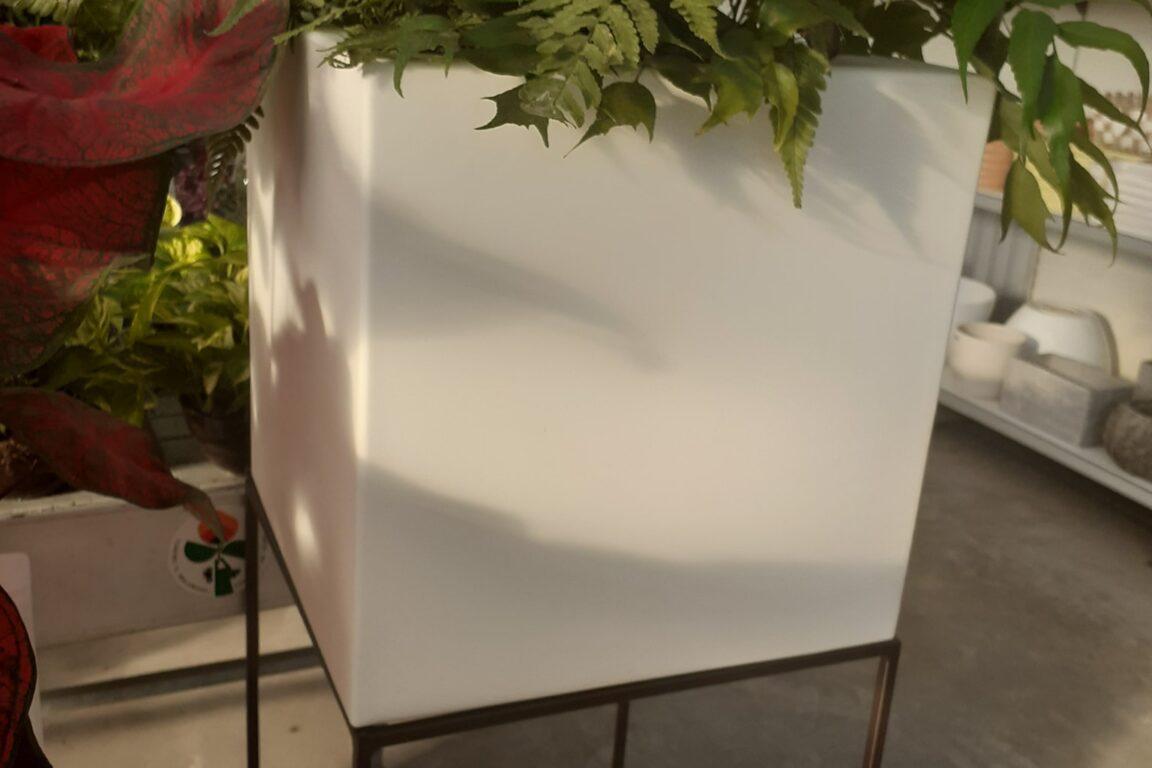 Vivai petrachi lecce - Novità 2020 - foto 5